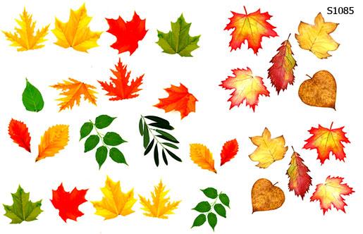 Слайдер дизайн осенние листья S1085