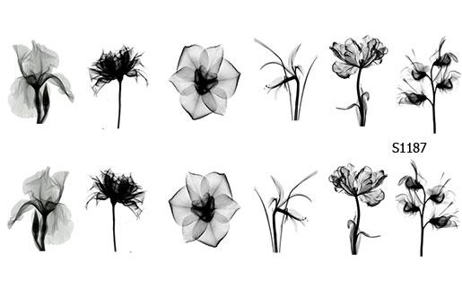 Слайдер дизайн прозрачные цветы чб S1187