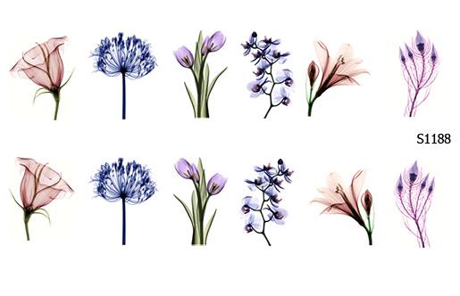 Слайдер дизайн цветы рентген S1188