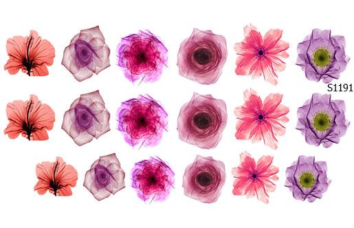 Слайдер дизайн розовые цветы S1191