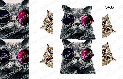 Слайдер дизайн кот в очках S486