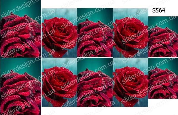 Слайдер дизайн красная роза S564