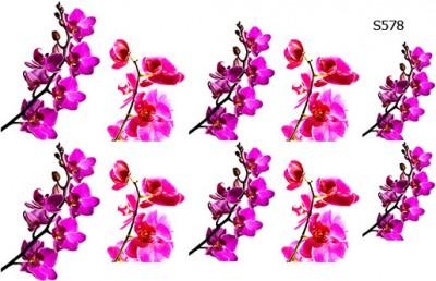 Слайдер дизайн орхидея ветка S578