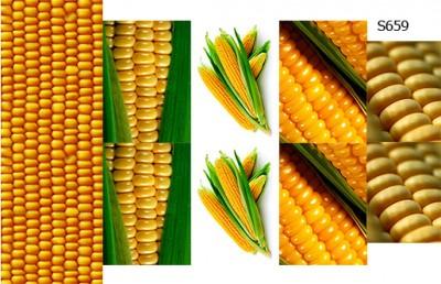 Слайдер дизайн кукуруза S659