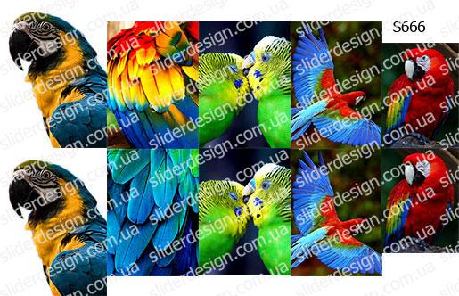 Слайдер дизайн попугай S666