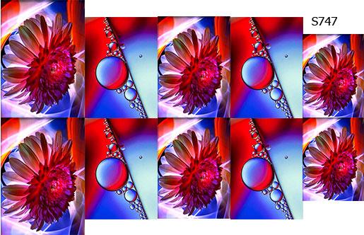 Слайдер дизайн цветок макро S747