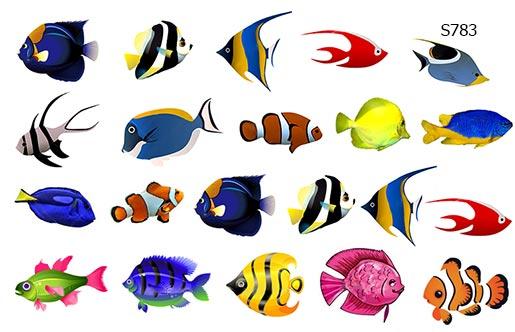 Слайдер дизайн рыбки тропические S783