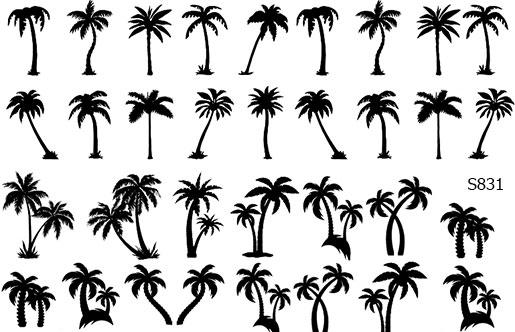 Слайдер дизайн пальмы S831