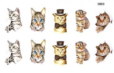 Слайдер дизайн кошки, котики S869